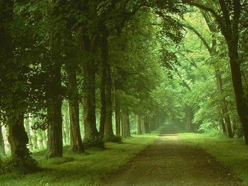 三月绿色森林 - 沈慕文 - 沈慕文的博客