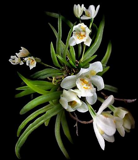 2010年4月19日 - lzj4218 - lzj4218的博客