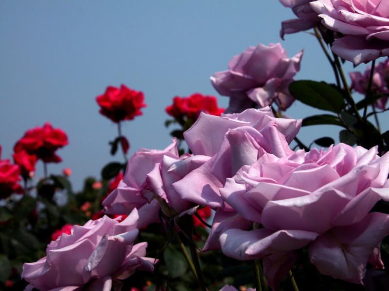 十二姐妹花 - 。.| ↙`蕶誶哋、庝。ゞ☆ - 蕶誶哋、庝。   博客