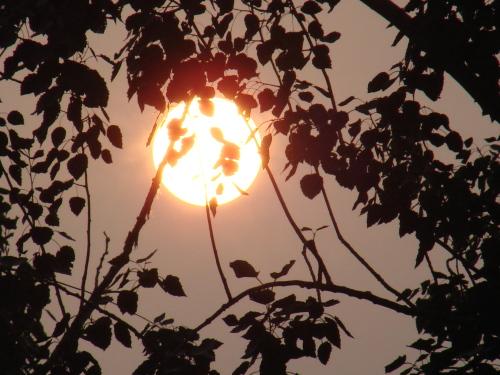 嫩太阳系列 - 陶东风 - 陶东风