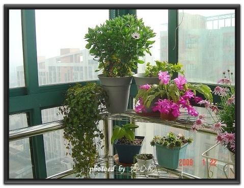 09年的阳台 - 一路花开 - life among blooms