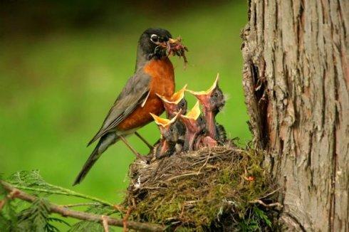美得令人震撼!世界各地最漂亮的鸟类  - 愚人 -