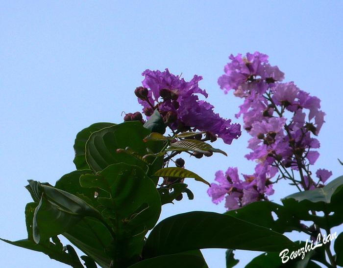 【原创】访莲江村之六  亲近自然——花儿像幸福一样开放 - 半支莲 -