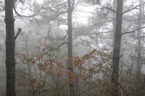 雾里看山 - 汪洋 - 汪洋的博客