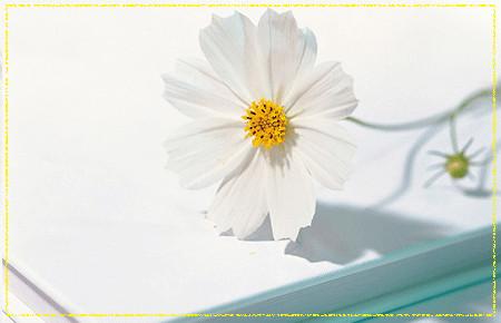 让心情象花儿一样绽放 - 冰思绕指柔 - 冰思绕指柔的博客