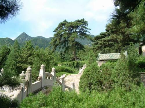 慈禧刨断光绪生父坟地古树的隐情 - 中华遗产 - 《中华遗产》