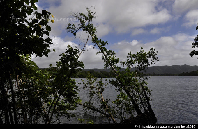 【昆士兰】迷失在北昆士兰的热带雨林Lost@Rainforest of North Queesland - 鱼儿 - 鱼儿的遨游生活