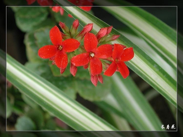 植物精美图谱600种(三) - 香儿 - 香儿