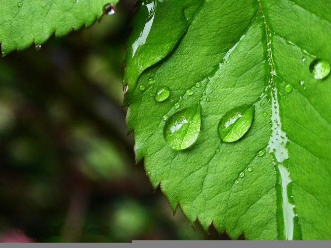 春雨。。。。。。 - pdl3210 - pdl3210的博客