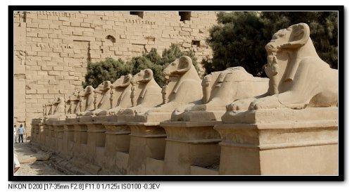 梦回法老王朝 埃及 八图片