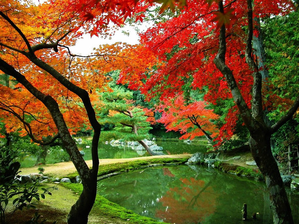 红叶之美 - 五花山红叶 - 五花山红叶