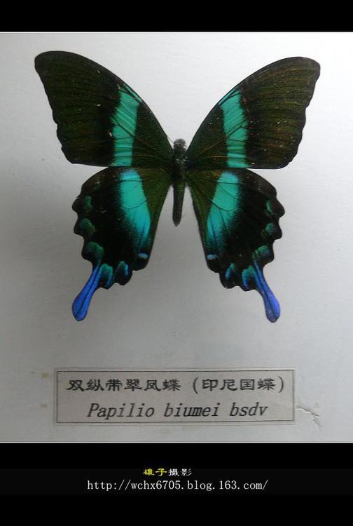 【原创摄影】千姿百态的蝴蝶(3) - 雄子 - 雄子言语