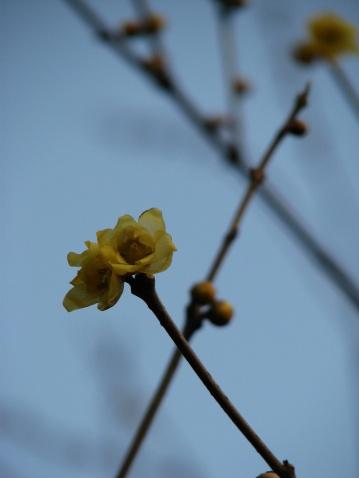 冬景〔摄影〕 - 梅儿 - 梅儿心语