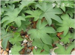 植物精美图谱600种(八)  - 香儿 - 香儿