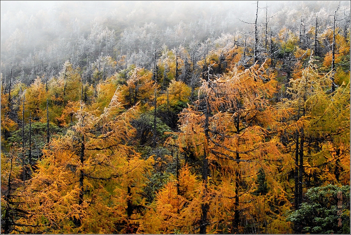 [原创]木格错——彩林世界 - 迁徙的鸟 - 迁徙鸟儿的湿地