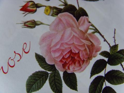 彩色铅笔画玫瑰花 铅笔画玫瑰花的画法