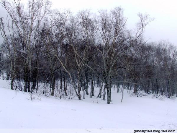 2009版之风雪长白山(原创) - 我的布尔哈通 - 我的布尔哈通