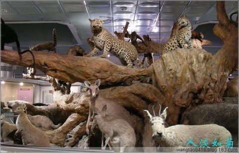 参观大连自然博物馆 - 人淡如菊 - 人淡如菊的博客