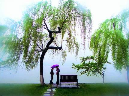 中华美文写华章____江南即景 - 雨忆兰萍 - 网易雨忆兰萍的博客