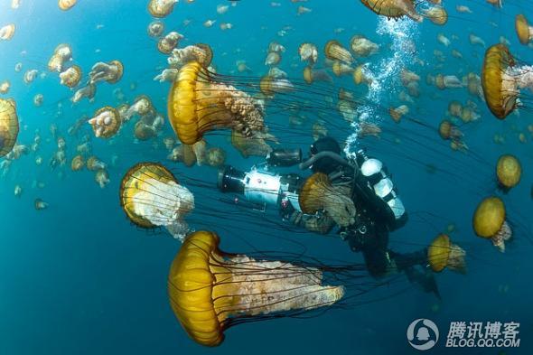 探秘神秘的海底世界 - 自由人 - 自由人的博客
