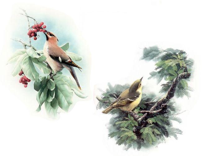 精品鸟图 - 好色重友 - slx456的博客