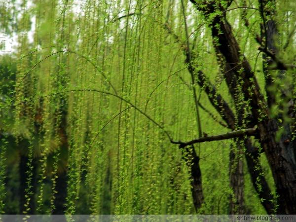 【引用】春雨滋润绿意浓(原创10幅) - zong440709山泉清韵 - zong440709的博客