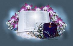 看书吧(原) - 青青茉莉花 - 保护自然.崇尚真理.热爱生活
