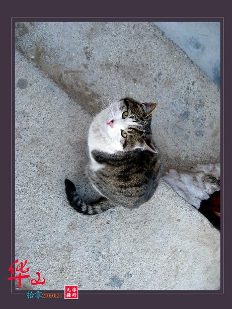 华山.猫.锁与人 - zy7312 - zy7312