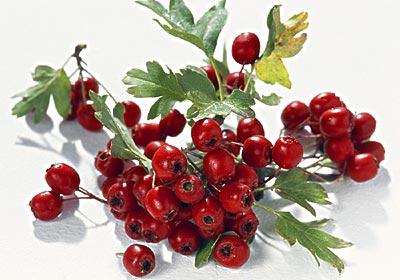 吃十种水果女人想不美都难 - 小菊花 - 我 de 博客