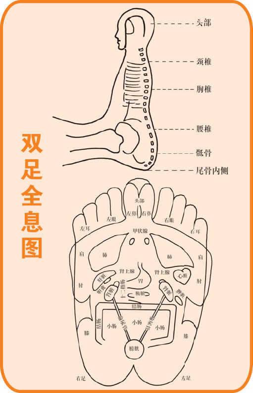 手诊、面诊----人体全息图(坠足法 -- 治足寒症、用脑过度) - 北京真道教会 -    北京真道教会博客