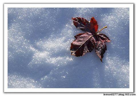 雪 - 流云 - 飘逸的流云