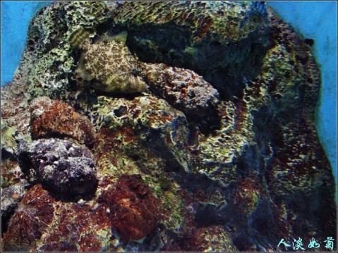 被逼进园却也尽兴的老虎滩海洋公园 - 人淡如菊 - 人淡如菊的博客