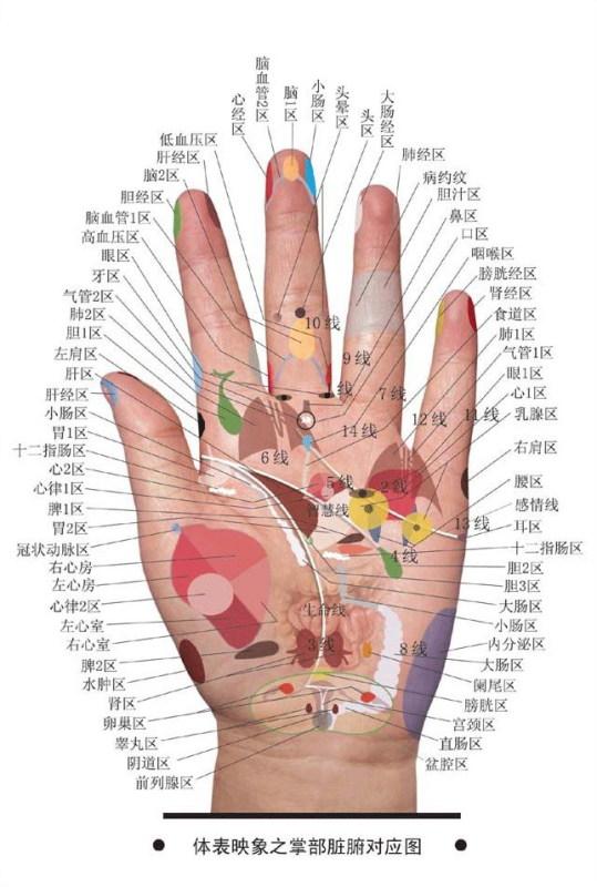 身体器官工作表一览 为了你的健康请看看吧 - LOVE - 亲密爱人-你知道我等你好久好久了吗!