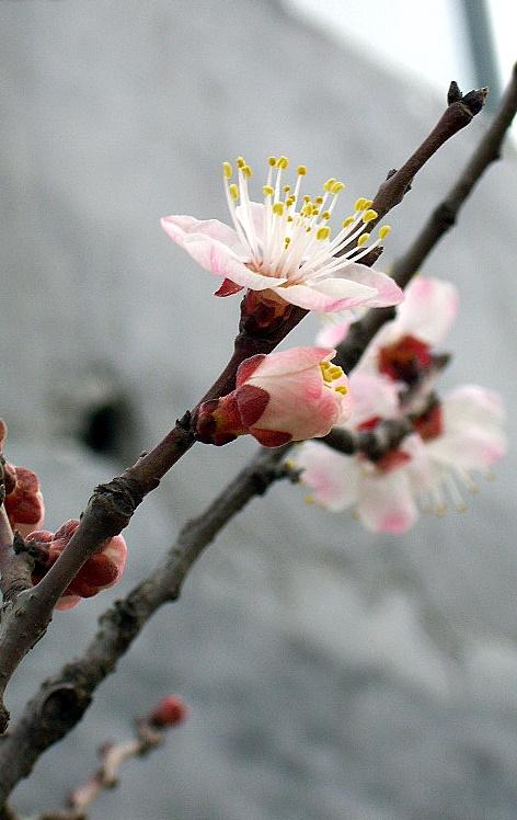 我的花卉摄影~~多多指教 - 坏老头 - 坏老头