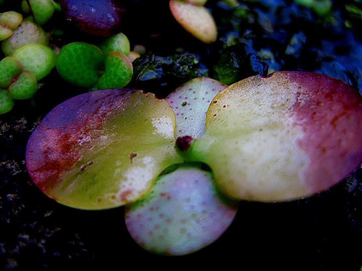 神奇土地奇异品种--南非花卉   - AAA级私秘视觉馆 - 视觉与色彩的世界