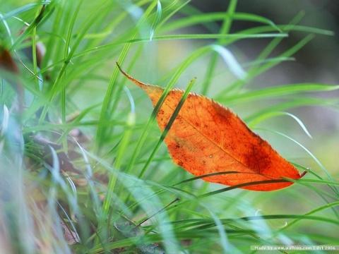 (原创)诗歌:我是一片深秋的叶 - 听雨赏雪        大李  - 听雨赏雪    大李的博客