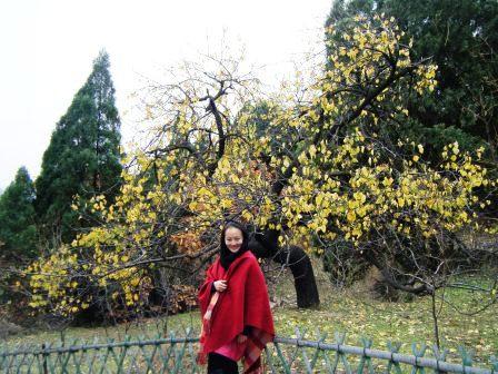 银山塔林---京郊红叶行(2) - 老虎闻玫瑰 - 老虎闻玫瑰的博客