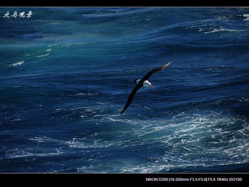 南极:南极海鸟 - 海阔山遥 - .