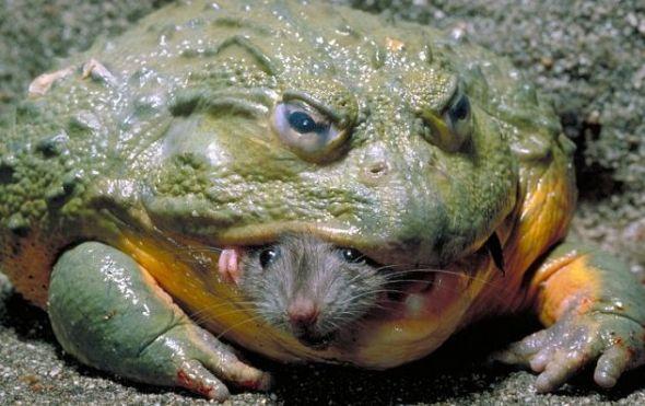 牛蛙内部结构图