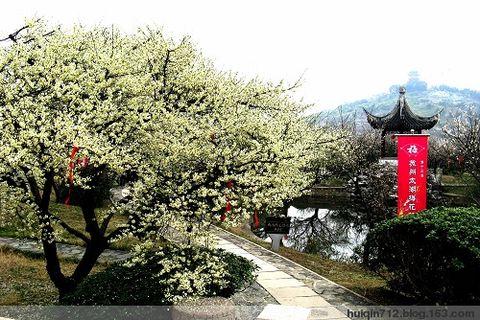 西山赏梅来(原创)  - 心路旅程 - 心路旅程的博客