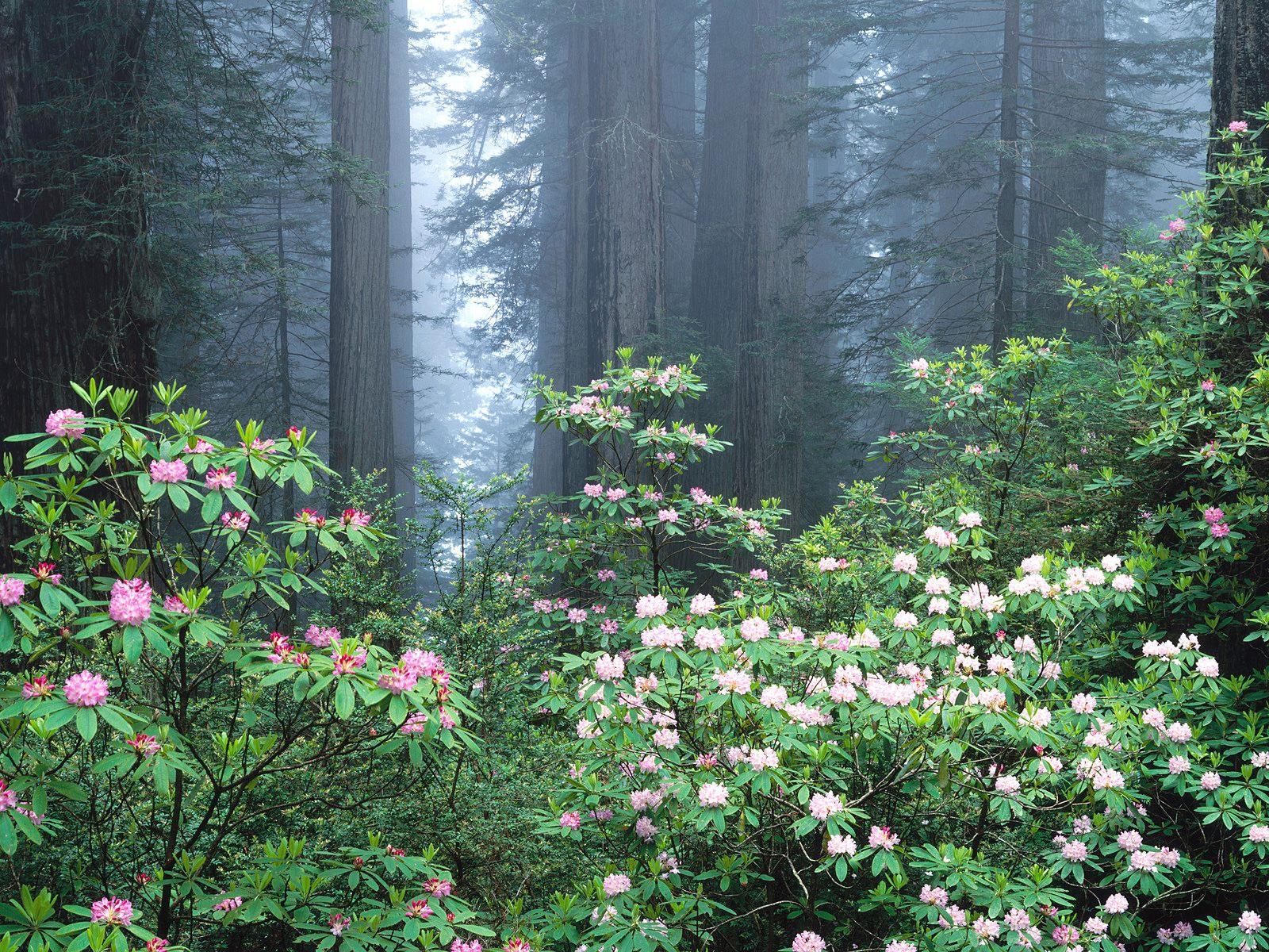 视觉大餐-树木植物 - . - .