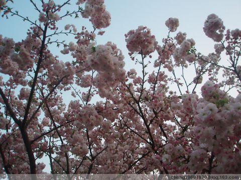 在春天里的行走! - 诗情若心 - 诗情若心--若的微语世界!