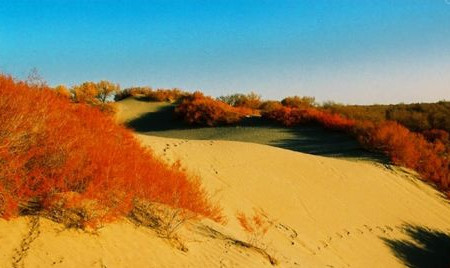第一写手访谈录(第05期) - 疏勒河的红柳 - 疏勒河的红柳