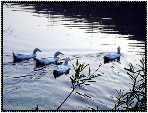 【原创图片】穿越白河峡谷-4/6 - 珠峰 - 插上飞翔的翅膀