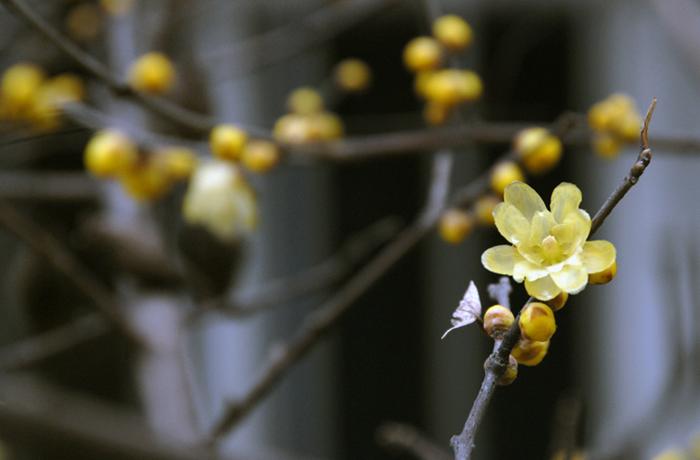 春的信使 - qfjun2010 - qfjun2010的博客