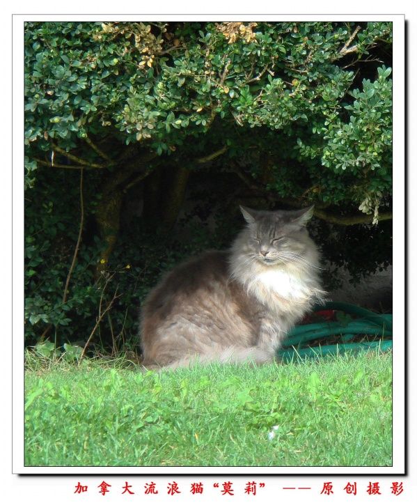 (原创摄影)加拿大的流浪猫 - 巧儿 - 欢迎光临巧儿的快乐家园