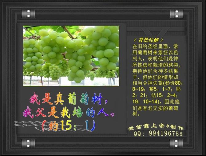 您一定要听的一篇讲道——《主是真葡萄树》 - 北京真道教会 -    北京真道教会博客
