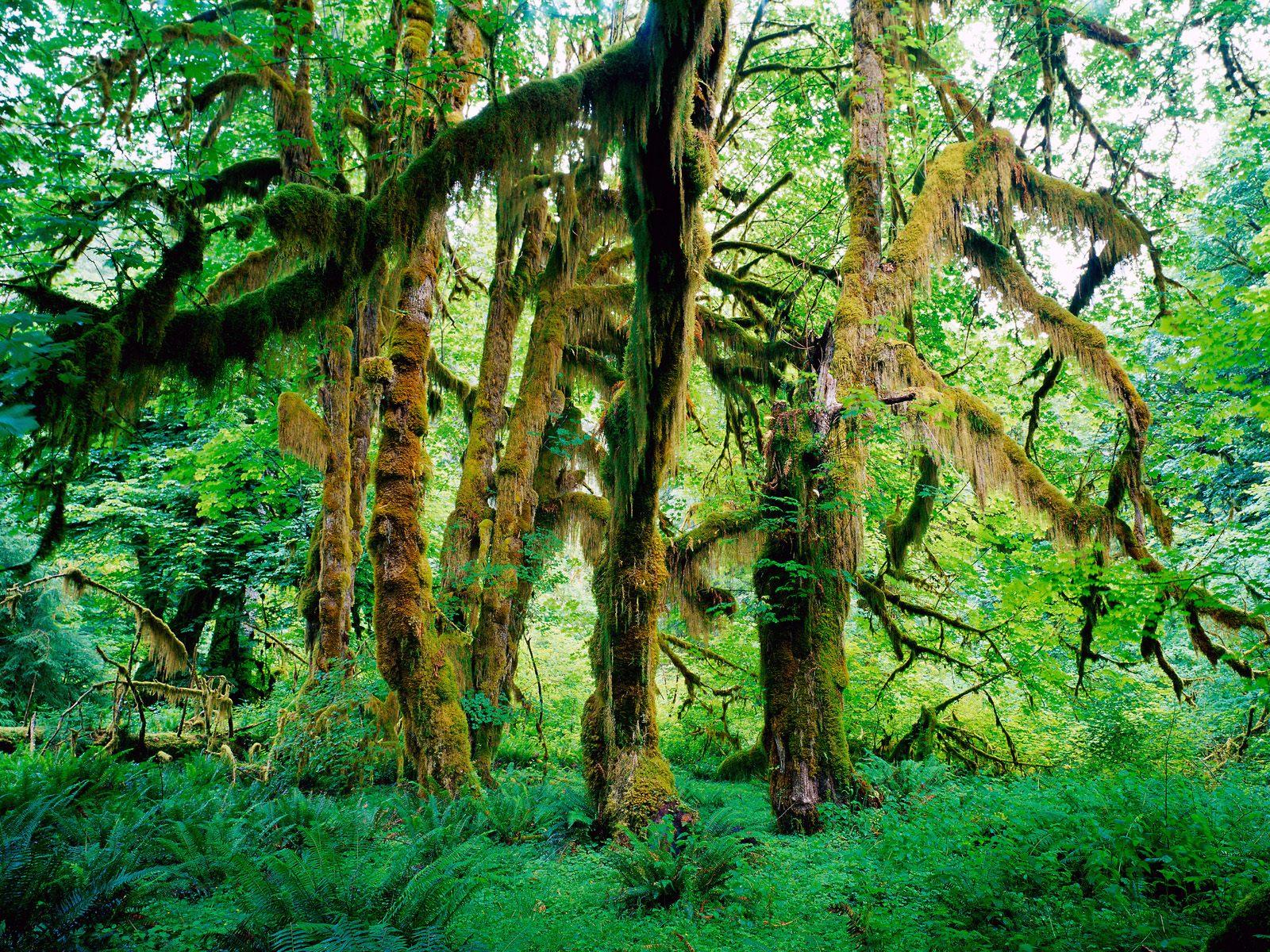 树木植物(超宽幅超精美) - 绿海浪涛 - 绿海浪涛