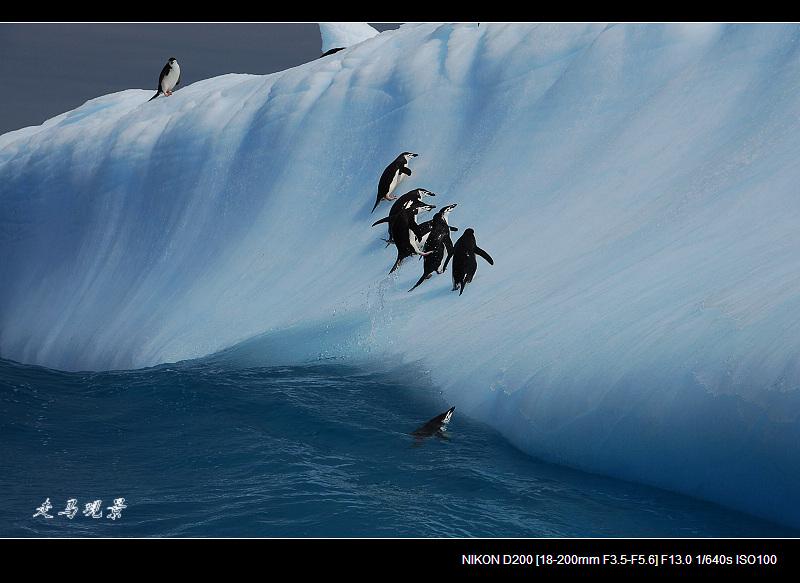 啊,南极(十四) - 西樱 - 走马观景