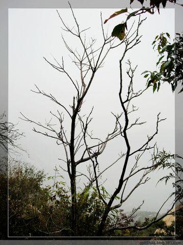 六月荷花摄影《北京后花园秋色~枯树倒影》 - 六月荷花 -  六 月 荷 塘